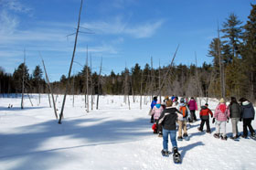 WOW Snowshoeing Adventure